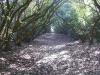 Rustoord laan van rododendrons